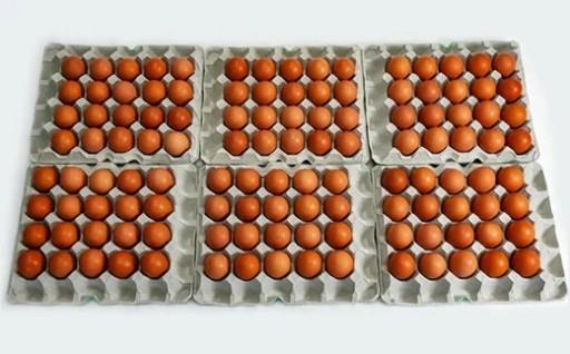 美ら卵養鶏場のたまご120個セット(60個セット×2ケース)