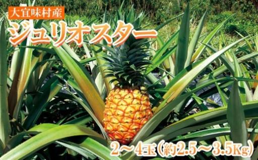 【数量限定】大宜味村産ジュリオスター【2020年夏発送】
