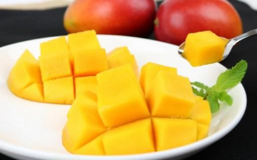 【2020年発送】受け継がれる味 金城農園のマンゴー 2kg