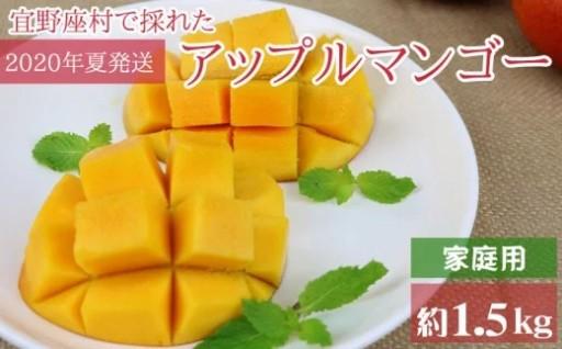 【2020年発送】アップルマンゴー(家庭用)(1.5kg)
