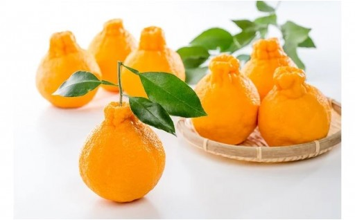太良町のみかん特集第2弾!!爽やかな柑橘をお届け!!