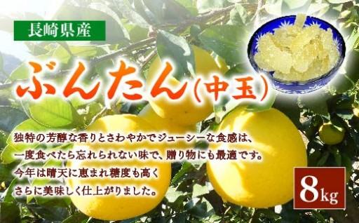 長崎ぶんたんの会 「ぶんたん(中玉)」 8kg