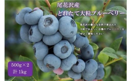 山形県 尾花沢産のブルーベリー(7月中旬~8月上旬頃発送)