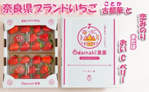 甘すぎると絶賛!Odamaki農園さんのイチゴ(^^♪