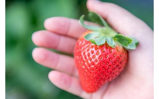 2月は、人気の果物特集