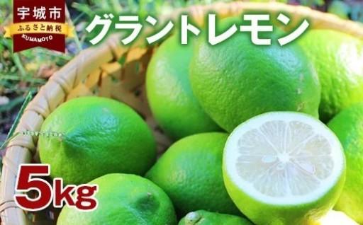 グラント レモン 5kg 柑橘 果物 フルーツ 冷蔵