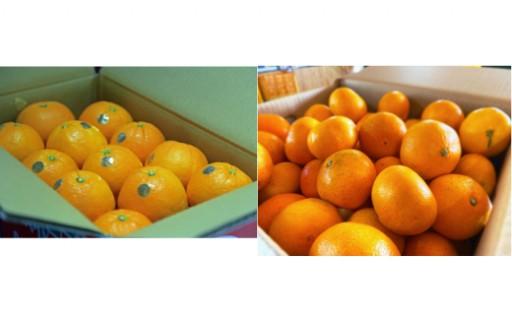 実はみかんや柑橘類の宝庫の宇佐市