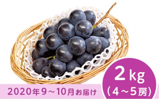 【皮ごと食べられる♪】長野市産ナガノパープル 2kg