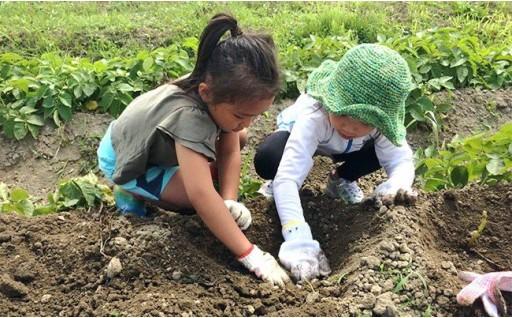 有機配合・農薬未使用で育った野菜を自分で収穫してみませんか?