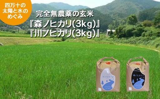 完全無農薬の玄米『森ノヒカリ』『川ノヒカリ』セット