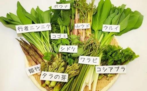 春の味!天然山菜受付スタート!