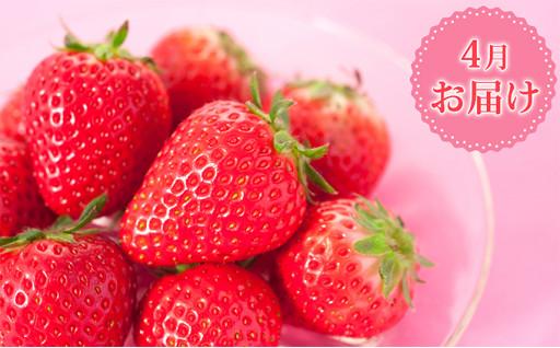 【4月お届け】3種のいちご食べ比べセット