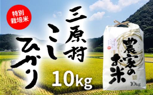 もっちりとした粘りと程よい甘み!特別栽培米こしひかり10kg