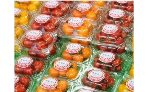 愛菜美人標準規格フルーツトマト4品種8パックセット