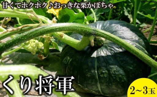 【大玉限定】ホクホク甘い! くりかぼちゃ 約4kg(2玉)