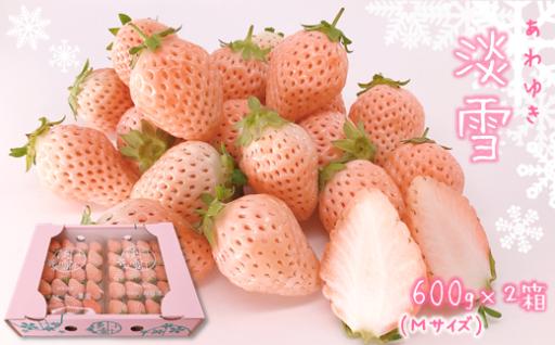 熊本玉名 白いちご「淡雪」(Mサイズ1200g)