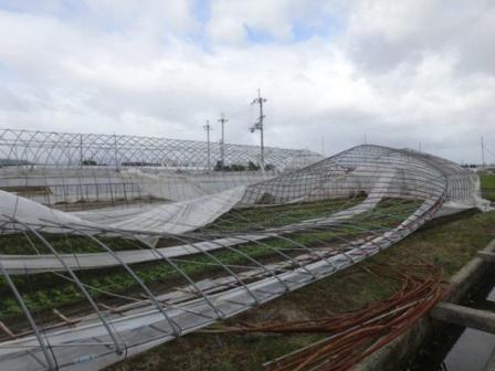農林水産業の被害も深刻です。京都府では農林水産業被害に対し、農業者等復興支援事業をはじめ、1,297.5百万円(台風18号:559.5百万円、台風21号:738百万円)の予算を計上し、被災された方々の支援に取り組んでいます。