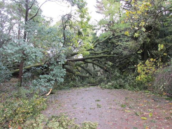 府立植物園(京都市左京区)では、台風21号の強風の影響により、園内の樹木約100本が倒れ、10月23日から26日までの休園を余儀なくされました。