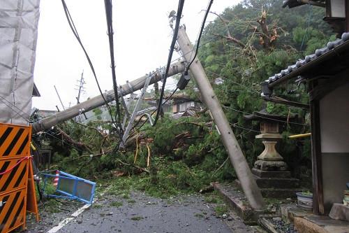 倒木により電信柱が倒壊