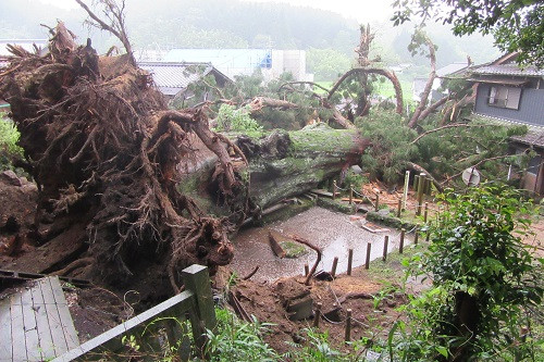 豪雨による倒木