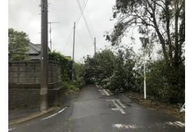 令和元年台風15号(千葉県栄町)