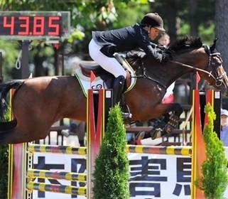 障害飛越競技馬