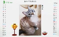 ●動物カレンダー(動物保護団体アニマル倶楽部監修)