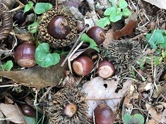 2.産出された木材「アベマキ」を活用