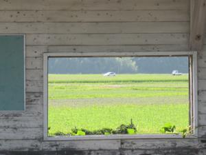 窓から見える田園風景