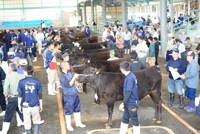 全国トップレベル、宮崎県畜産共進会の見学も