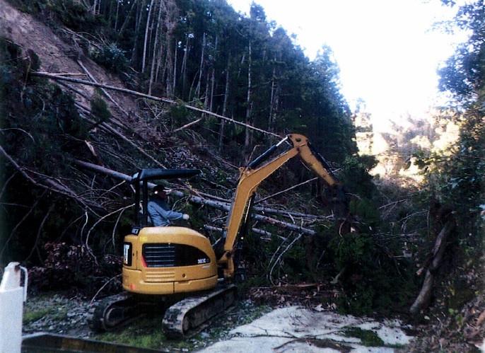 びわ園地内の倒木撤去費用をびわ農家に対し補助します