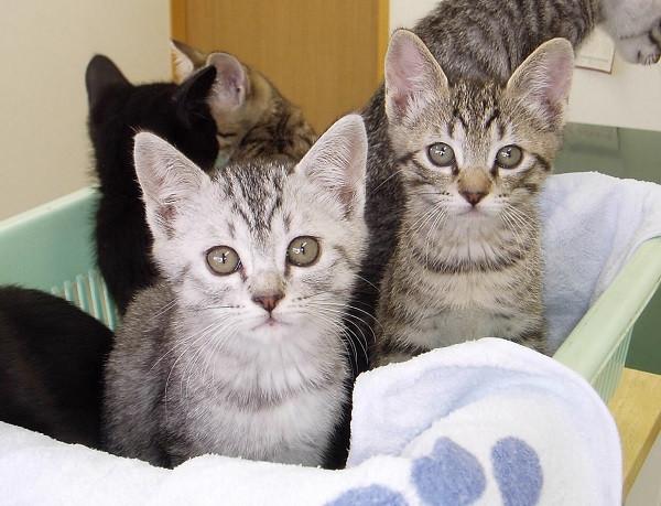 飼い主がいない猫を増やさないことがどうして重要なの?