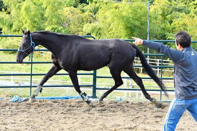 安全・安心・快適を馬に伝え、人との信頼関係を築き上げることが必要
