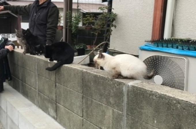 地域猫は懐けばとても良い猫