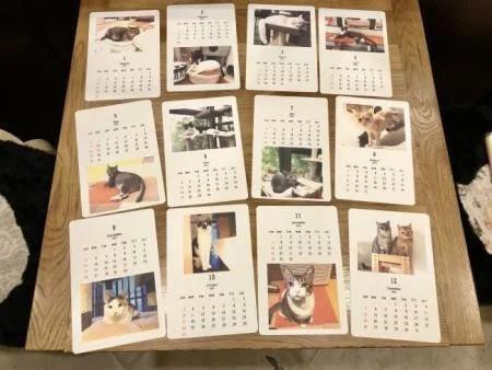 保護猫Café「 MOCA」の猫カレンダー