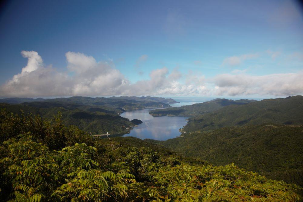 世界遺産の森をガイドとめぐる!湯湾岳登山ツアー