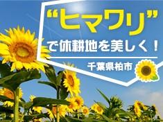"""手賀沼ヒマワリプロジェクト  """"teganuma sunflower project"""""""