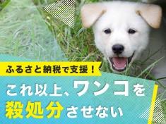 """年間10,000頭以上が殺されています~日本で殺処分される犬を""""ゼロ""""に~"""