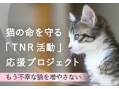 みんなの力で守れる猫の命がある~人と動物が共生できる社会を目指して~