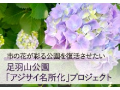【第二弾】足羽山公園を市の花アジサイの名所として復活させたい!