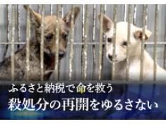 """年間8,000頭以上が殺されています~日本で殺処分される犬を""""ゼロ""""に~"""