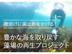 磯焼けに歯止め!豊かな海を取り戻す藻場の再生事業(第2弾)