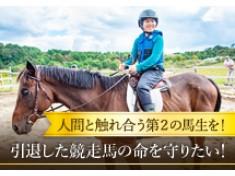 引退した競走馬の命を守りたい!引き馬で人間と触れ合う第2の馬生を!