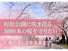 【さくら名所100選】村松公園の3000本の桜を老木や病害虫から守りたい