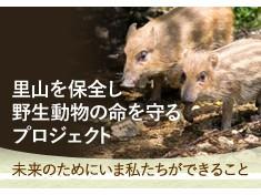 【第三弾】里山を保全し野生動物の命を守る~未来のためにいま私たちにできること~