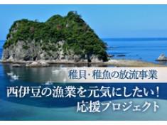 西伊豆の漁業を元気にしたい! 稚貝・稚魚の放流事業(3年目)