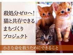 1代限りの命の大切さを忘れず、人と猫たちが共存できる社会づくりを未来につなぎたい