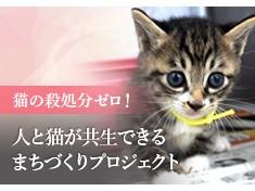 猫の殺処分ゼロのまちへ!不幸な猫をなくすため、動物愛護協会を支援したい!