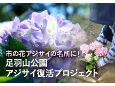 【第3弾】足羽山公園を市の花アジサイの名所として復活させたい!