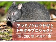アマミノクロウサギを守りながら農作物被害を防ぎたい